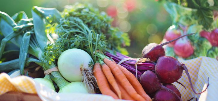 Plant-Based Nutrition – what's all the fuss about?